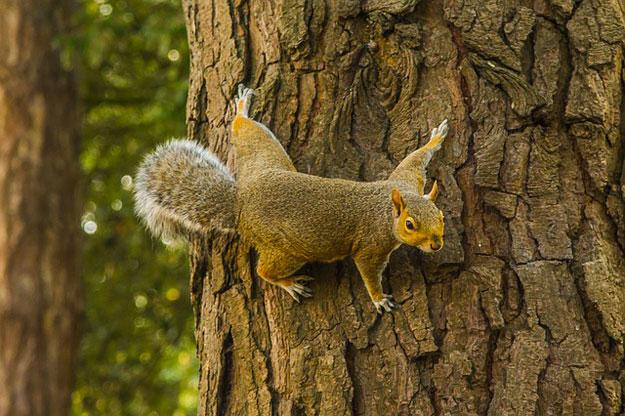 écureuil-hacker-electricite