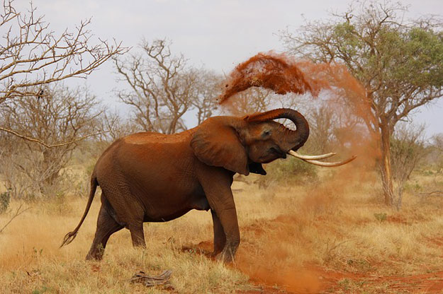 elephant-ivoire-braconnage