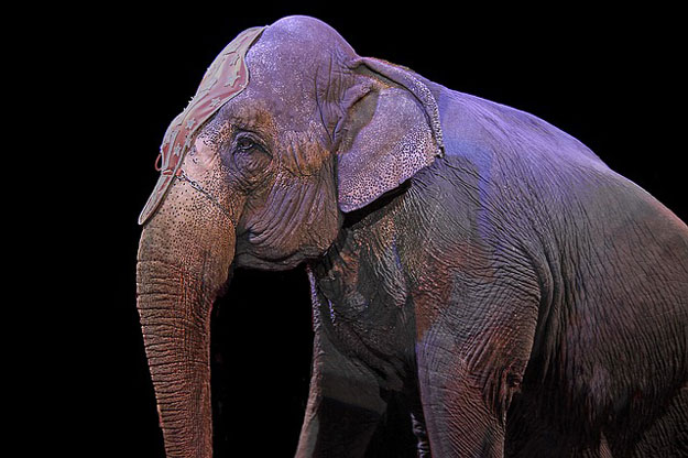 elephants-cirque-barnum