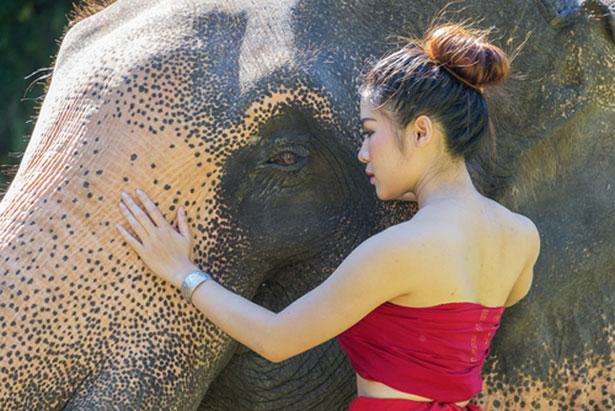 elephants-peaux-birmanie_shutterstock