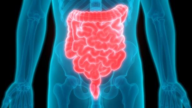 ferments lactiques, intestins
