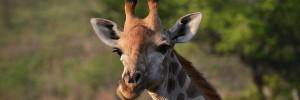 10 espèces animales à surveiller en 2017