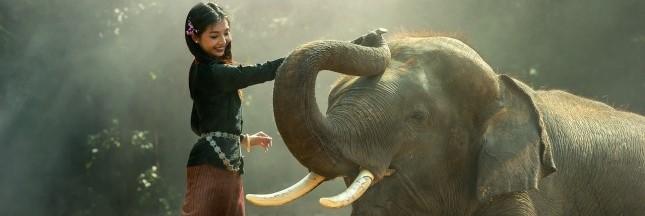 La fin du commerce de l'ivoire en Chine dès 2017