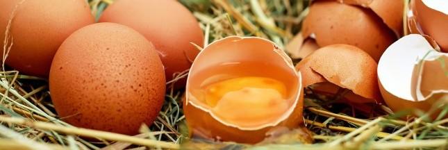 Élevages alternatifs: les producteurs d'oeufs demandent un investissement de la distribution