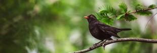 Ce week-end, participez au comptage national des oiseaux des jardins