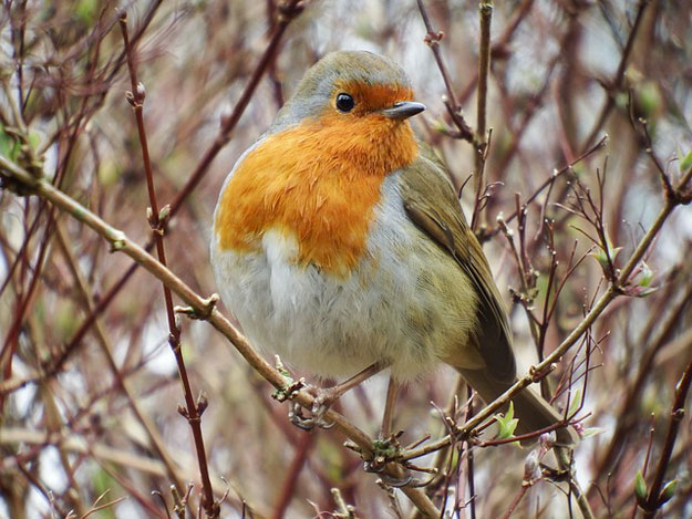 Ce week end participez au comptage national des oiseaux - Jardins ouverts au public ce week end ...