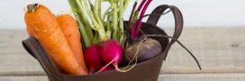 Cuisinez les légumes de saison en janvier: le panier AMAP