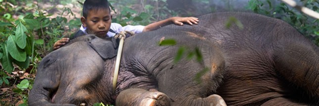 Birmanie: des trafics pour la peau des éléphants