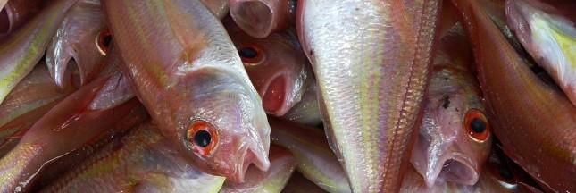 Le poisson, noyé dans la mondialisation