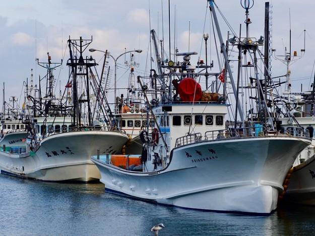 poisson, pêche intensive