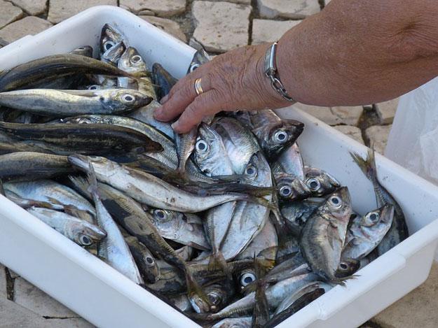 poisson-peche-souffrance