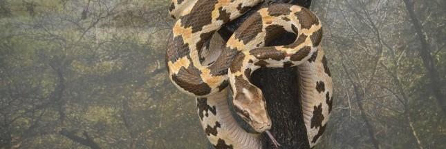 Les grands noms du luxe s'offrent une ferme à pythons
