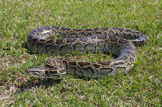 python-ferme-mode