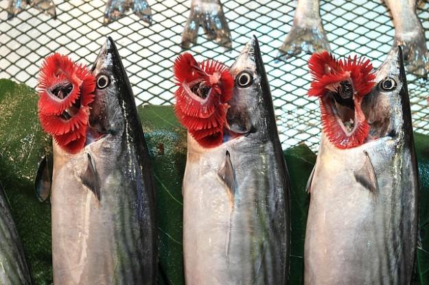 souffrance des poissons, branchies