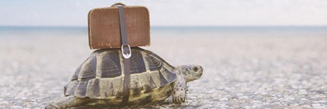 Trafic: 6.000 tortues sauvées en Inde