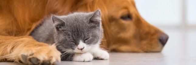 Test produit : la Box Yarrah alimentation bio pour chats et chiens