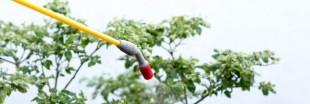 Consultation publique sur l'interdiction des pesticides néonicotinoïdes