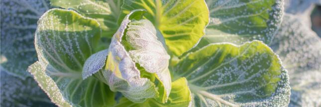 Jardiner en février : le jardin en hiver, le potager