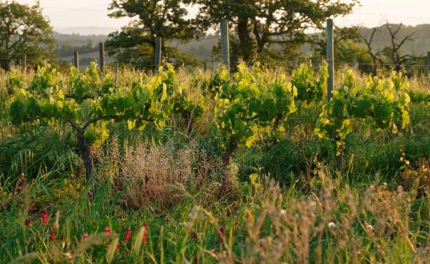 steiner, agriculture biodynamique
