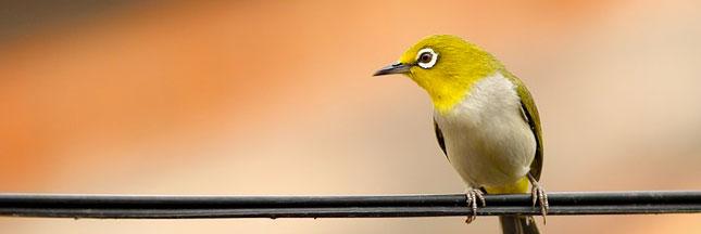 Le braconnage d'oiseaux sévit en Île-de-France