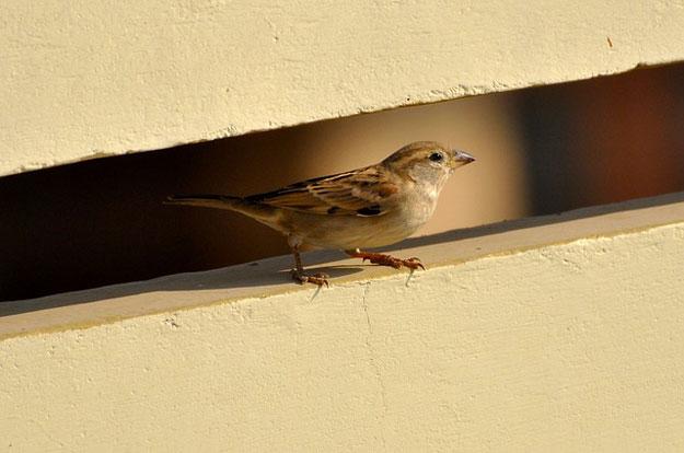 oiseaux-paris-braconnage