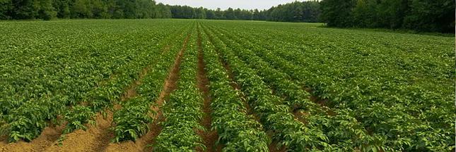 Greenpeace dévoile son classement 2017 des enseignes de la grande distribution dans la course Zéro pesticide