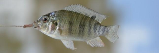 Aquaculture : des dérives dénoncées par l'ONG Bloom