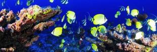 Les abysses marines, encore plus polluées que la surface de la terre ?