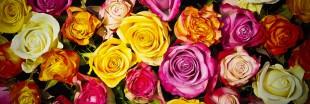 Infographie : que faire des roses de la Saint-Valentin ?