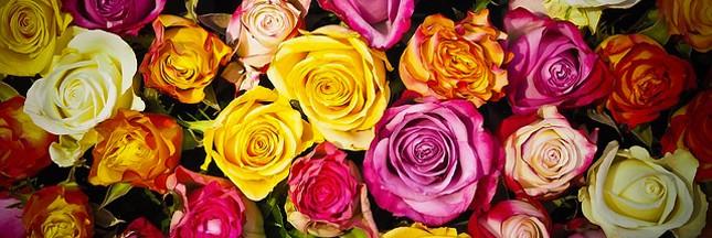 Infographie: que faire des roses de la Saint-Valentin?
