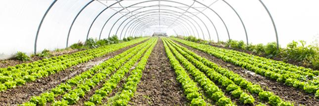 Serres écologiques : la haute technologie au service de l'environnement et de la santé