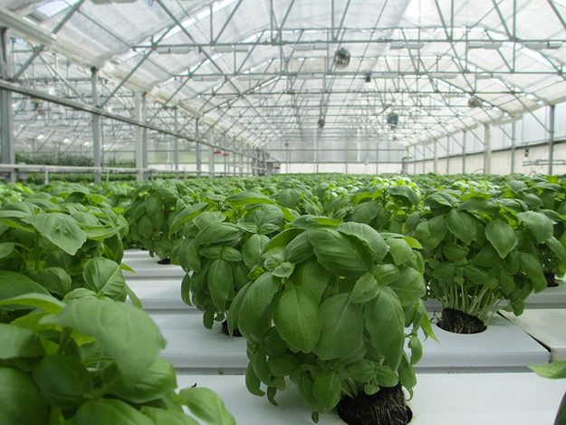 serres écologiques, légumes