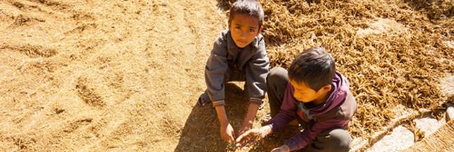 L'agriculture n'exploite pas que la terre, mais aussi les enfants!