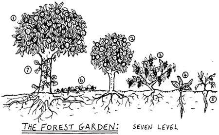 forêt-jardin