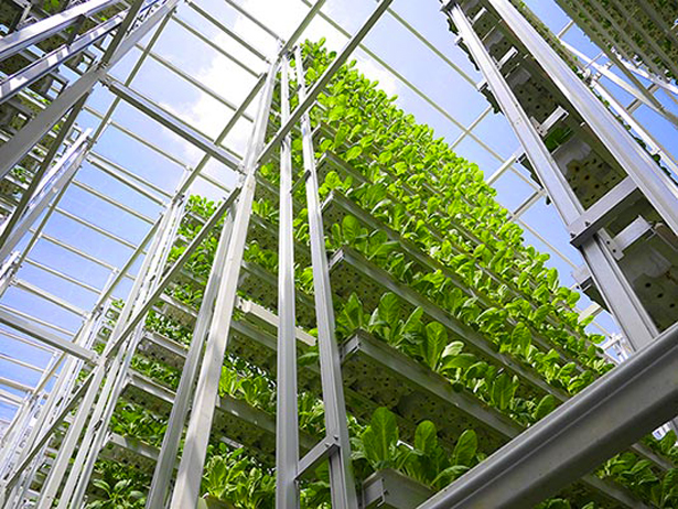 agriculture-verticale-singapour