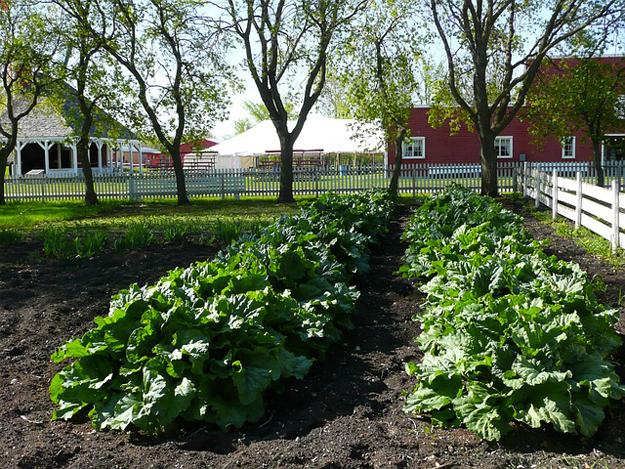 agriculture-ville-detroit