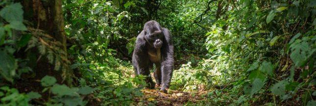 Douze pays s'engagent pour sauver le bassin du Congo
