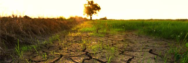 Climat : 2016, l'année de tous les extrêmes