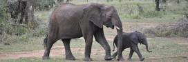 Commerce de l'ivoire: le Parlement européen demande son interdiction totale