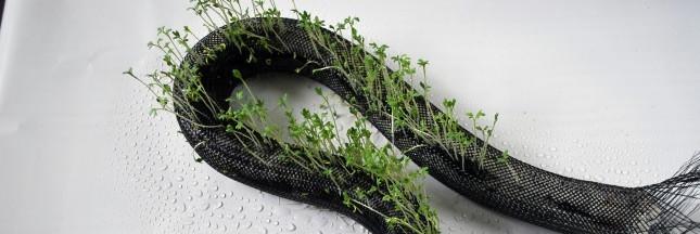 Florarobotica et les végétaux hybrides: des robots pour s'occuper des plantes?