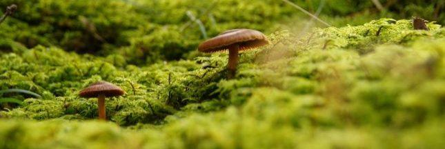 La mycorhize pour une deuxième révolution verte?
