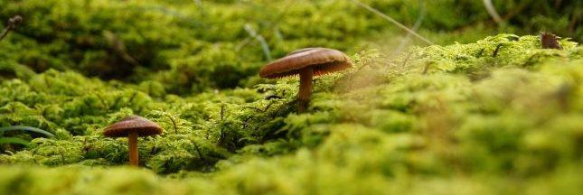 La mycorhize pour une deuxième révolution verte ?