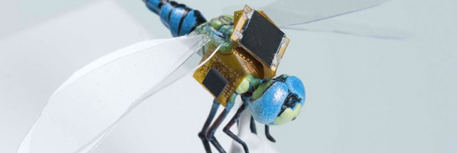 Insectes-cyborgs ou cyber-insectes?
