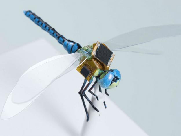 libellule-cyborg-insectes