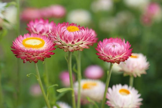 livre-fleurs-sauvages