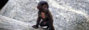 Extinction biologique : la moitié des espèces pourraient s'éteindre d'ici 2100