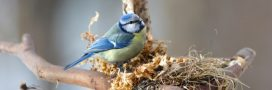Idée reçue: les oiseaux dorment dans un… nid d'oiseau