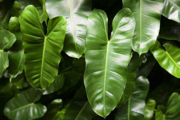 plantes intérieur mars