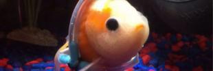 Avez-vous déjà vu un poisson rouge en fauteuil roulant ?