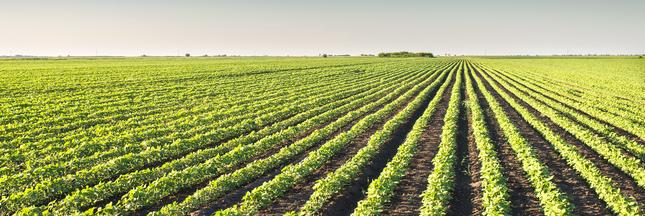 Candidats, les Français rêvent d'une agriculture plus verte !